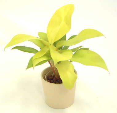 http://www.bloom-s.info/blog/images/firoden.jpg