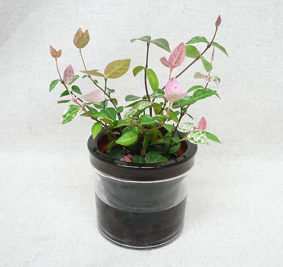 http://www.bloom-s.info/blog/images/hatsuyuki.jpg