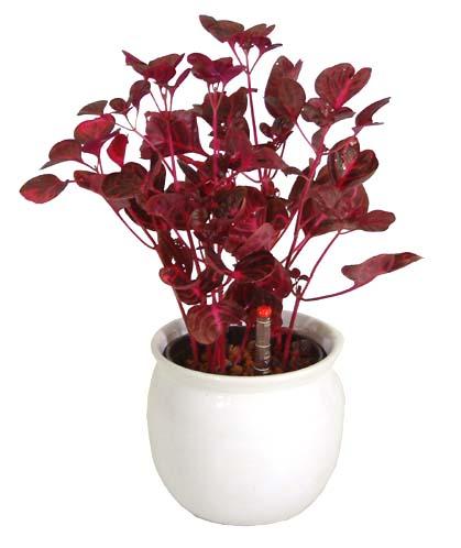 http://www.bloom-s.info/blog/images/herbstii.jpg