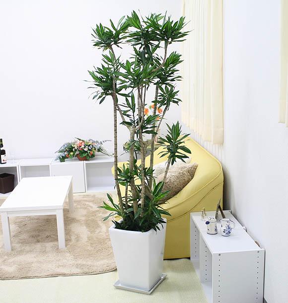 http://www.bloom-s.info/blog/images/jamaikab.jpg