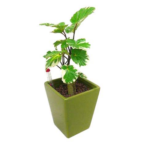 http://www.bloom-s.info/blog/images/pori-mazi.jpg