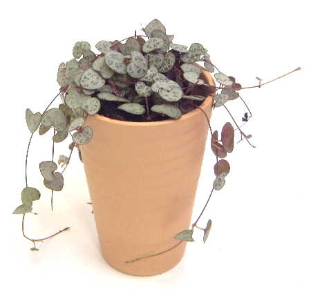 http://www.bloom-s.info/blog/images/t-heart3.jpg