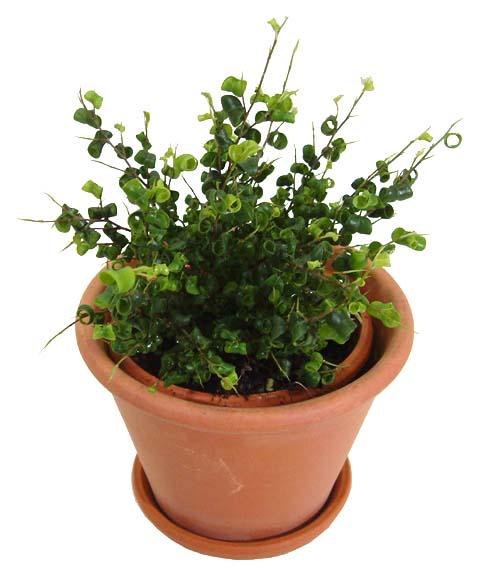 http://www.bloom-s.info/blog/images/t5-fbaroks.jpg