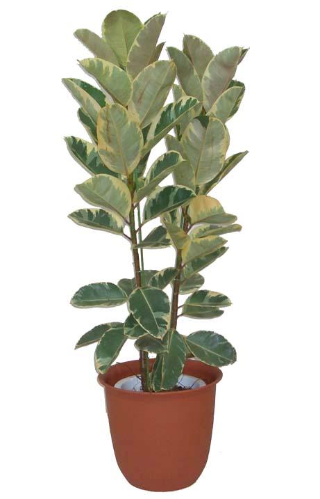 http://www.bloom-s.info/blog/images/tu-brasil.jpg